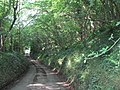 Leafy lane through Backpath Wood - geograph.org.uk - 208691.jpg