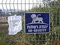 Leo Judah net (2863356834).jpg