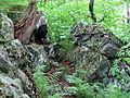 Lichen Elk Knob NC SP 1028 (3774126308).jpg