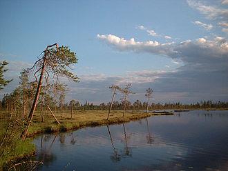 Kuusamo - Marshland near Liikasenvaara