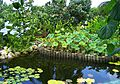 Lily Pond at Queen Elizabeth II Botanic Park.jpg