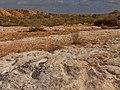 Lime Platform, Lavan Creek, Negev, Israel משטחי גיר, נחל לבן, רמת הנגב - panoramio (1).jpg