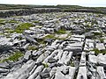 Limestone pavement - geograph.org.uk - 1469632.jpg