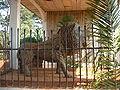 Lion de la chefferie de Bana.jpg