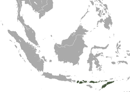 Lombok Flying Fox area.png