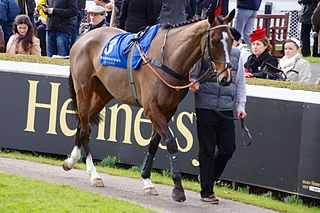 Lord Windermere Irish-bred Thoroughbred racehorse