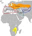 Luscinia luscinia. Distribution map.jpg