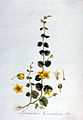Lysimachia nummularia — Flora Batava — Volume v3.jpg