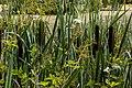 Münster, Botanischer Garten -- 2016 -- 3870.jpg