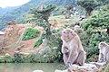 Macaca fuscata in Arashiyama Iwatayama monkey park.jpg
