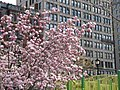 Magnolia With Everett Building (8669889842).jpg