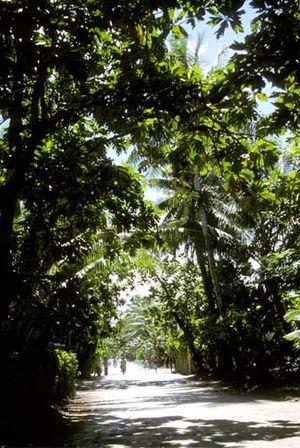 Funafuti - Main street of Funafuti.