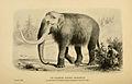 Mammoth BDL.jpg