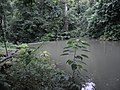 Mandin River Kotabaru - panoramio (2).jpg