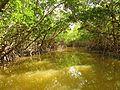 Mangrove Channel - Flickr - treegrow (4).jpg