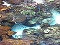 Many Dory - Flickr - potaufeu.jpg