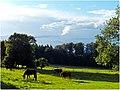 Marbach - Gomadingen - panoramio (1).jpg