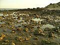 Marea baja en Los Caños.jpg