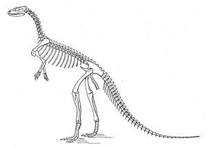 "Othnielosaurus - Othniel Charles Marsh's 1896 skeletal restoration of ""Laosaurus"" consors (now Othnielosaurus)."