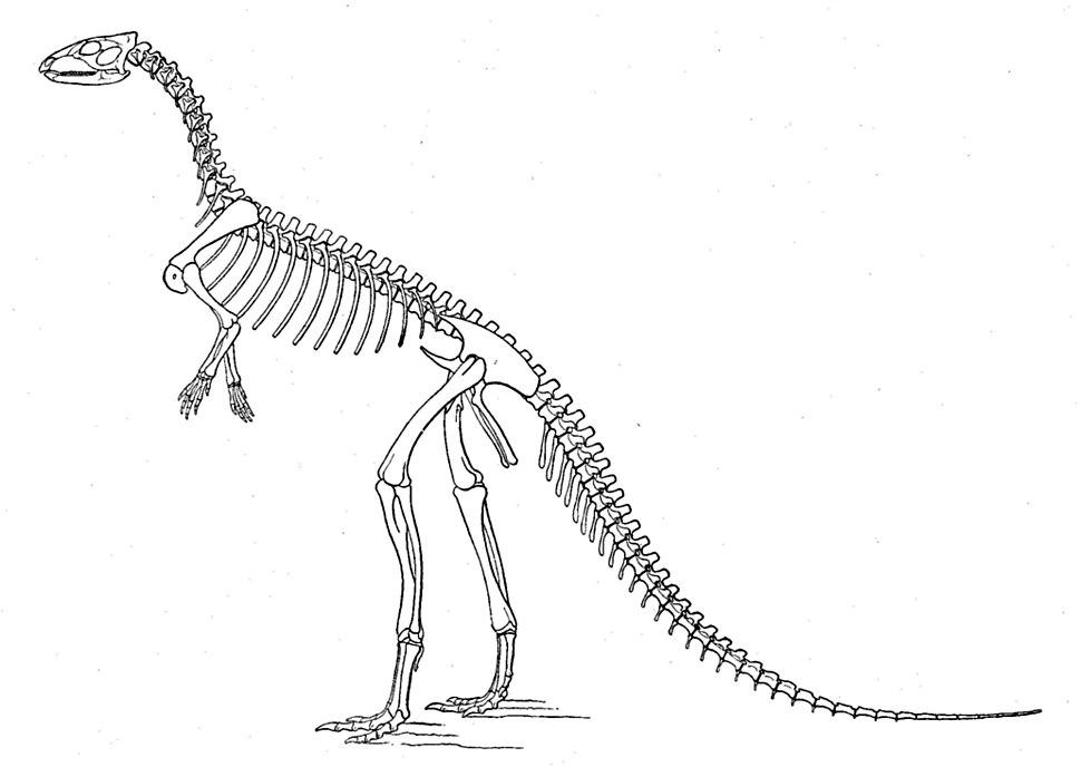 Marsh laosaurus