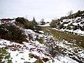 Marsh south of Waud House - geograph.org.uk - 1729868.jpg