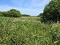 Marshland beside Slapton Ley - geograph.org.uk - 1358792.jpg