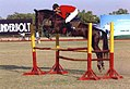 Marwari horse show jumping Jodhpur polo ground.jpg
