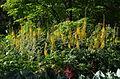 Massifs de fleurs - Parc floral 3.JPG