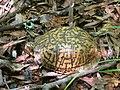 Mattaponi Wildlife Management Area, Virginia (7468016540).jpg