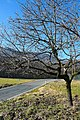 Mattodera, la strada tra i campi - panoramio.jpg