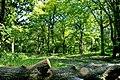 Max-Aschmann Park - panoramio (7).jpg