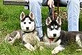 Max & Moritz resting in Deer Park.JPG