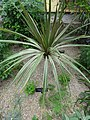 Mediterranean - US Botanic Gardens 31.jpg