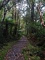 Milford Track - 2013.04 - panoramio (2).jpg
