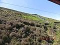 Mines Rd, Isle of Man - panoramio (1).jpg