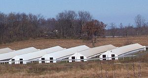 Fur farming - A mink farm in the United States