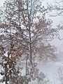 Minnesota - Snowstorm - Cam Loon, Apr 18, 2013 Snowing Pretty - panoramio.jpg
