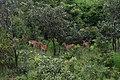 Mole National Park (5).jpg