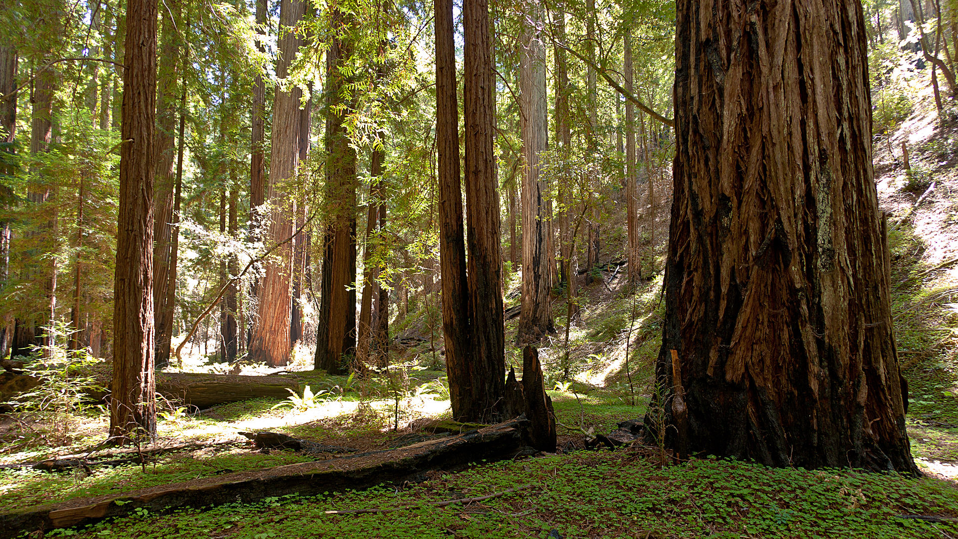 Montgomery Woods State Natural Reserve - Wikipedia