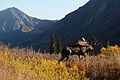 Moose in South Fork Eagle River, Alaska.jpg