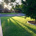Morning sun on the green lawn (29204539325).jpg