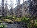 Mrtvé stromy pod Godeanu.jpg