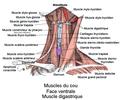 Muscle digastrique.png