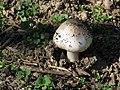 Mushroom (2289020764).jpg