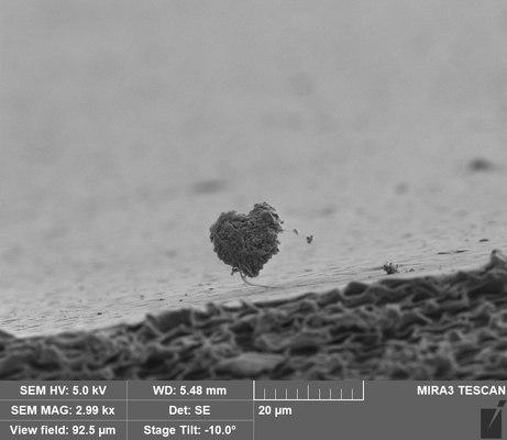My 10 micrometer heart.tif
