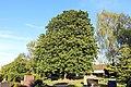 ND-7331-392 Kastanie Friedhof Bornheim-IMG 8198.jpg