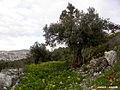 Nablus 2.jpg