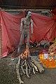 Naga Sadhu - Gangasagar Fair Transit Camp - Kolkata 2013-01-12 2500.JPG