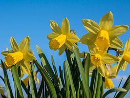 Afbeeldingsresultaat voor lentebloemen soorten
