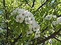 Nature in Smolensk - 21.jpg